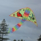 Delta kite with 2 butterflies for decoration.