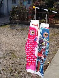 A couple of Japanese fish kites, in the traditional red and blue.