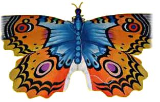 A Balinese butterfly kite in blue, orange and black.