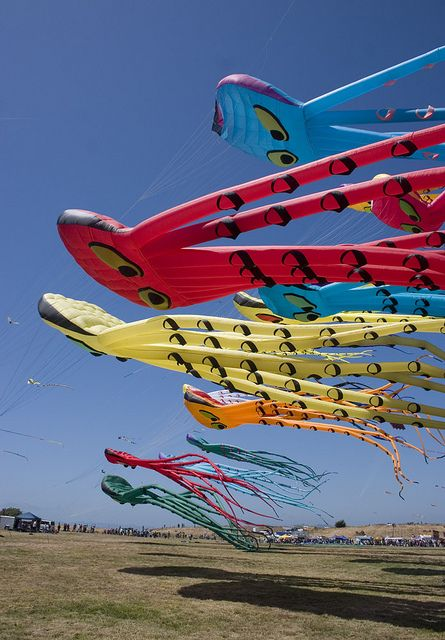 A close-up of Octopus kites at the Berkeley Kite Festival.