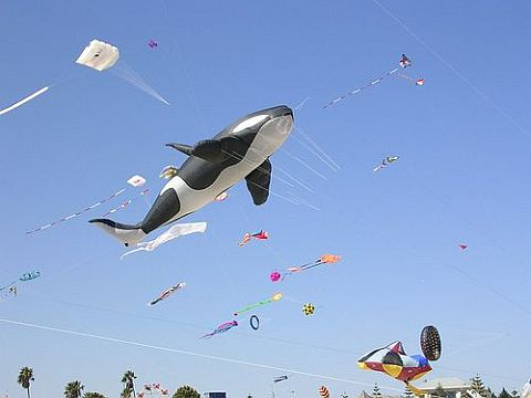 This Killer Whale inflatable kite is often seen at the Adelaide festival.