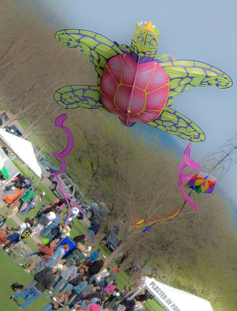 An unusual turtle kite proving its airworthiness.
