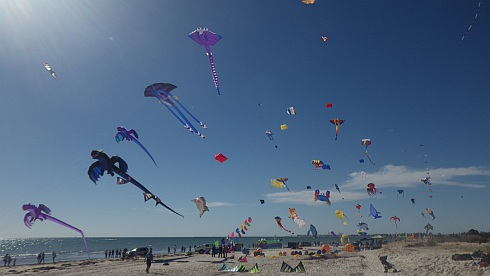 A huge variety of tethered aerial craft  at the Adelaide International Kite Festival.