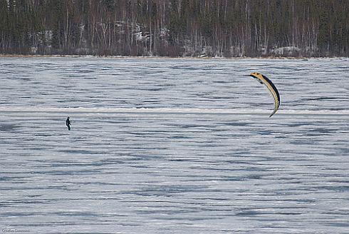 A lone kite-powered skiier near a forest.