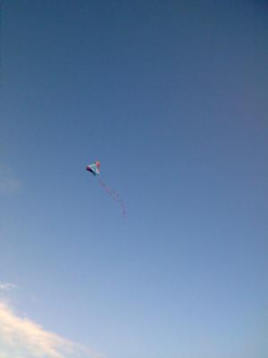 Barn door kite.