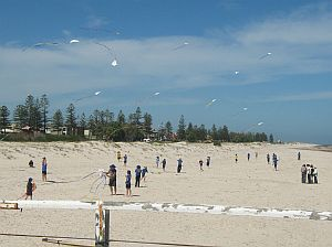 Adelaide Kite Festival 2009 - small white diamond kites over Semaphore beach.