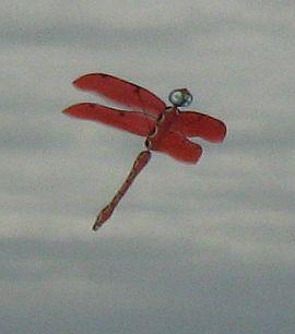 Dragonfly kite.