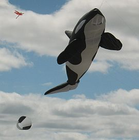 The large killer whale inflatable.