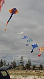 Adelaide Kite Festival 2016 - train of Ray kites.