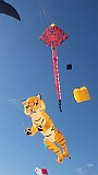 Adelaide Kite Festival 2016 - tiger inflatable.
