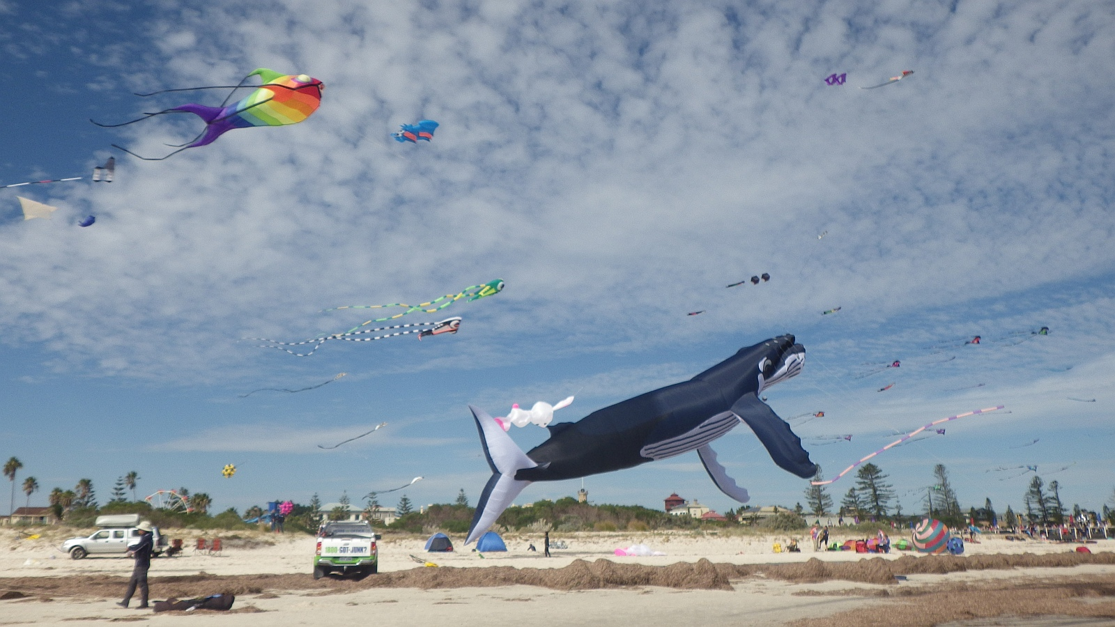 AIKF 2017. The large Whale inflatable viewed from the side, plus other kites.
