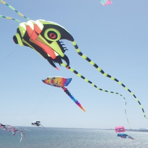 Trilobyte, Ray and other post-2000 show kites seen at the 2018 Adelaide International Kite festival.