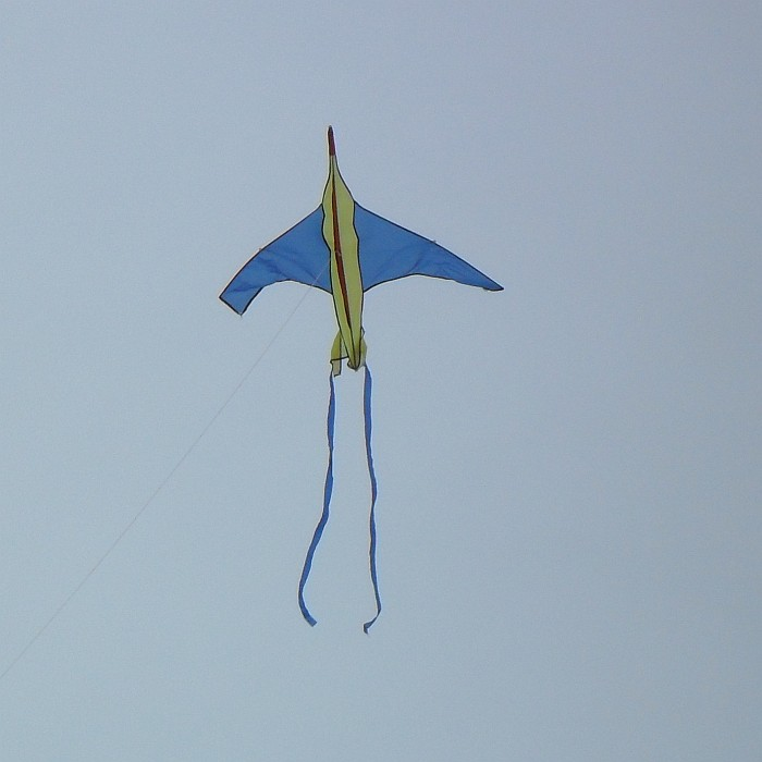 Blue-winged jet plane kite.