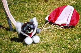 Tuffy the parachuting koala