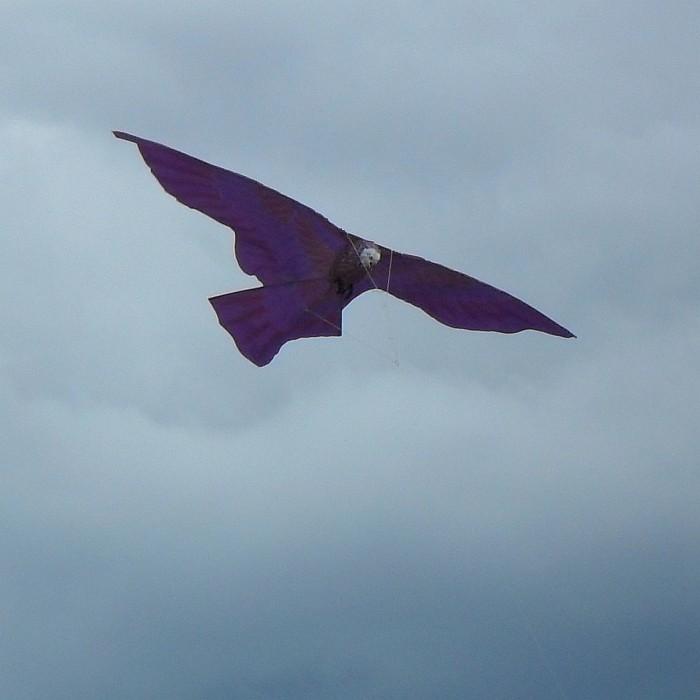 A bird kite - possibly...