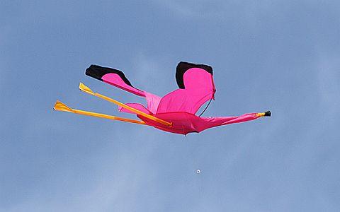 A humorous retail bird kite in flight.