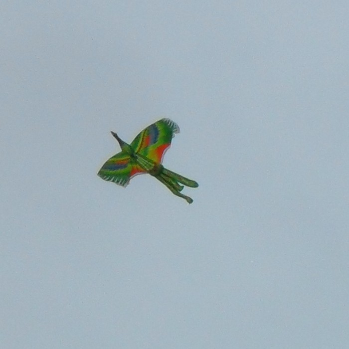 Colorful bird kite - from Bali?