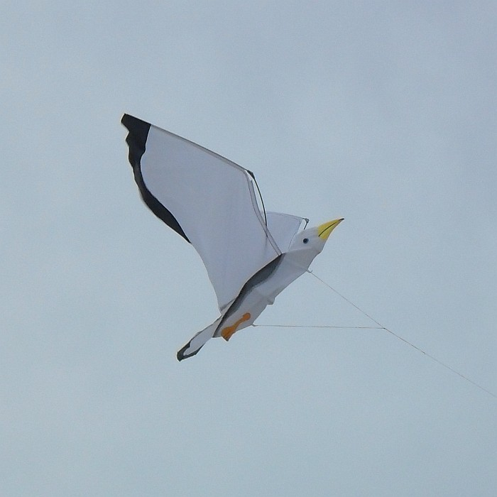 Sea Gull kite.