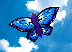 Modern butterfly kite from shop