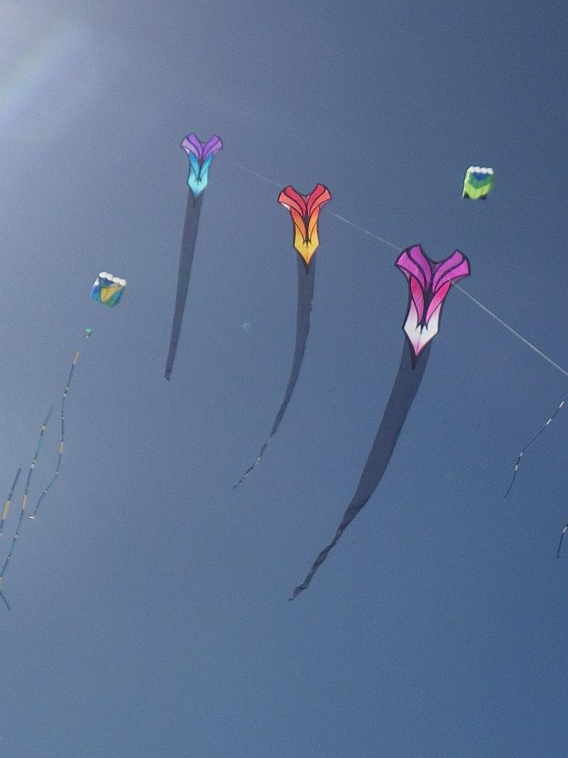 A train of Brasington art kites seen at the Adelaide Kite Festival.