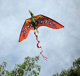 A very cool kite modeled after a flying pre-historic creature.