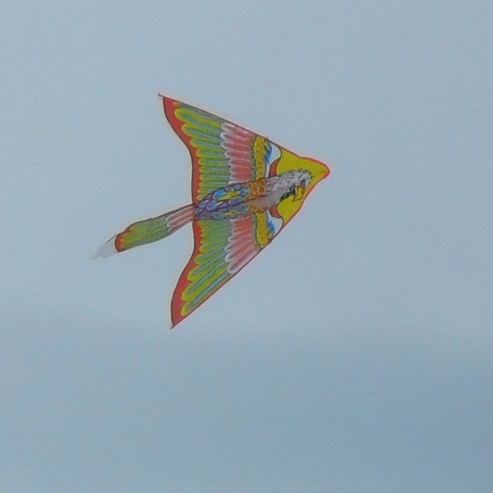 Another Eagle Delta kite.