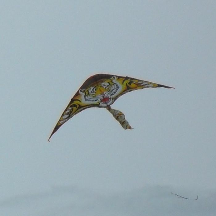 Delta tiger kite.