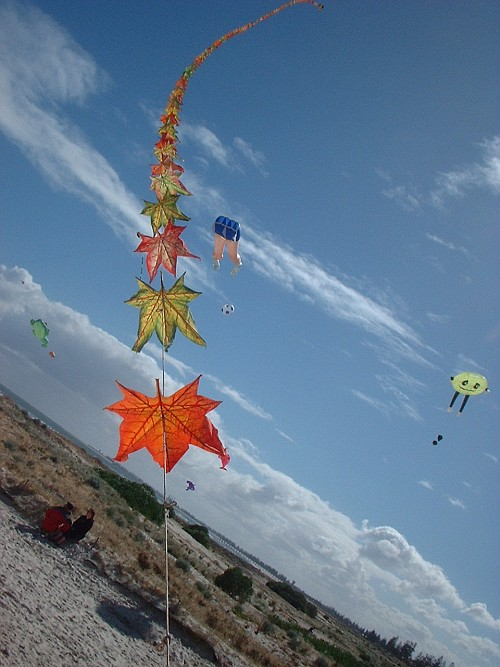 Different kinds of kites that can be seen at kite festivals.