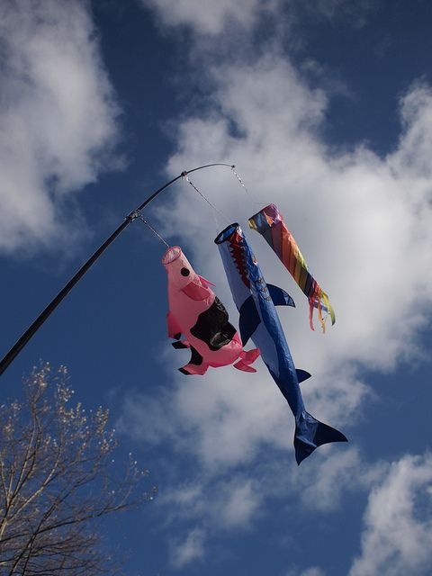 Japanese carp kite imposters!