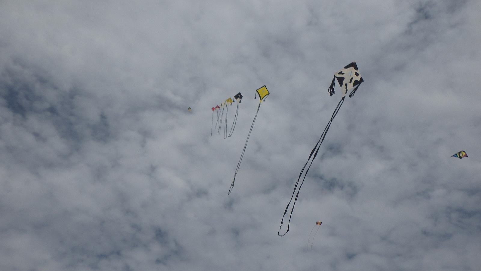 Kites on Flaherty's Beach, near Warooka, South Australia.