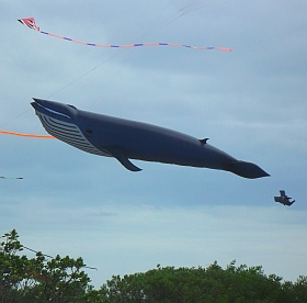 Giant kites like this Blue Whale inflatable can often be seen at kite festivals.
