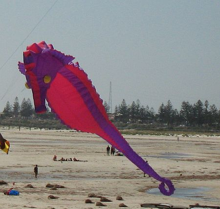 It was hard to miss this Sea-horse Inflatable with its garish colors!