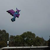 novelty bird kite