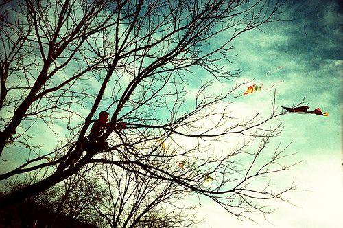 Kite Eating Tree - boy retreiving a stuck kite.