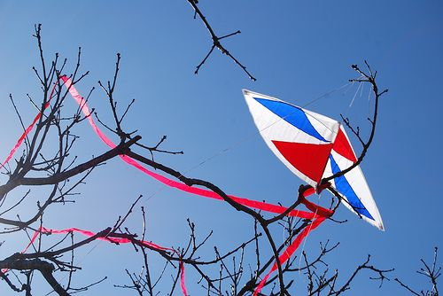 Kite Fighting - someone's colorful fighter kite stuck in a tree.