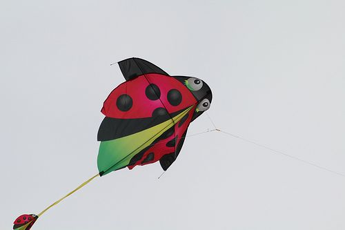Unique and creative Ladybug kite.