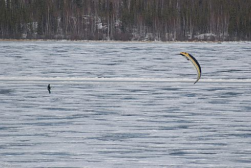 A lone kite-powered skiier near a forest.