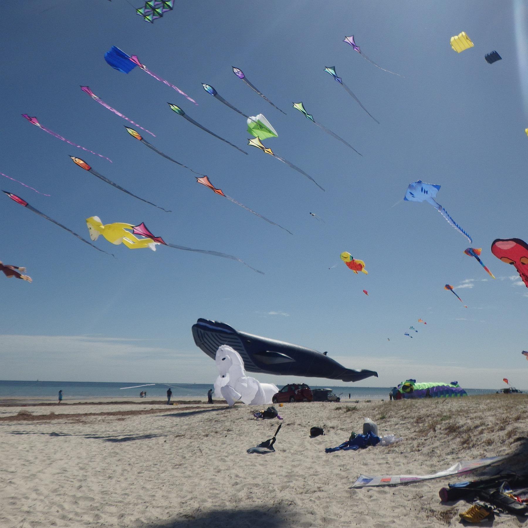 Adelaide Kite Festival 2015 Captured In Kap