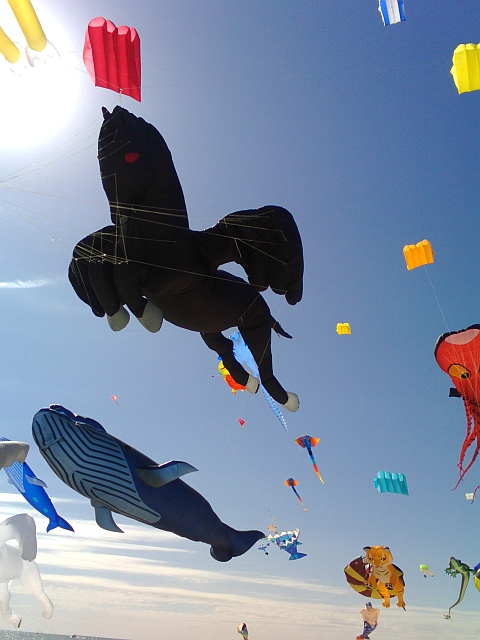 Adelaide Kite Festival 2015 - black pegasus inflatable kite