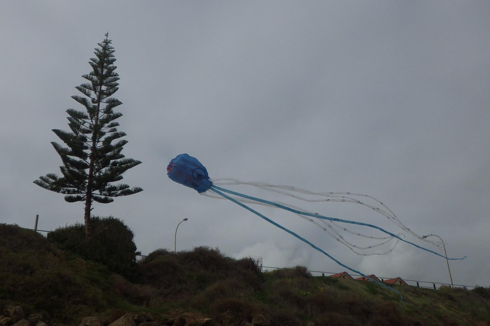 MBK Octopus kite 1 - 6.