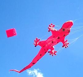 Murray Bridge Kite Festival 2016 - Inflatable Gecko under parafoil.