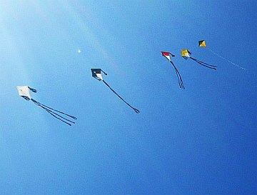 Multi-Fly Diamond kites on a 100 pound line.
