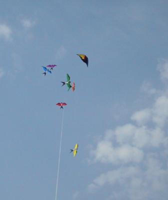 Soon-to-be-free kites!