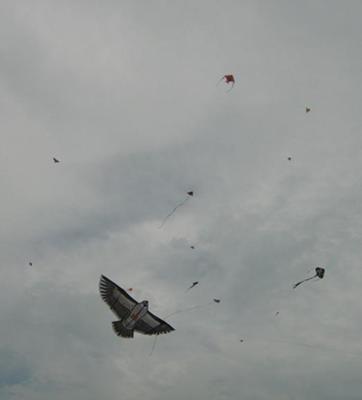 West Coast Park Kites