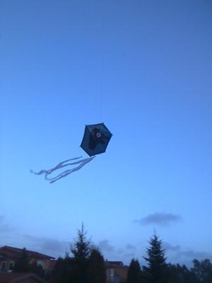 The homesick kite.
