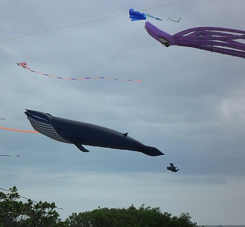 Some impressive kites at the Adelaide International festival in South Australia.