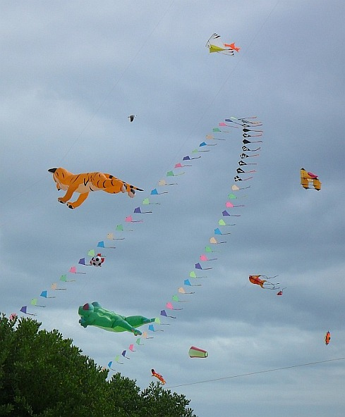 Learn more about kites by asking Tim a question...