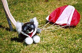 Tuffy the parachuting koala