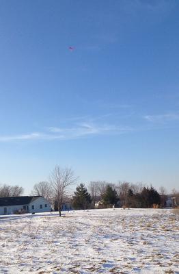 Hawk kite on light line