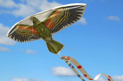 Kea Kite in Flight